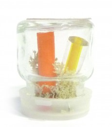 4ml Bottle-Terrarium-Featured